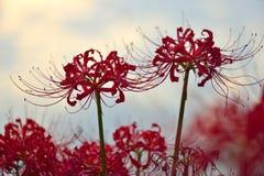 Flor del equinoccio fotos de archivo