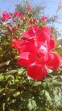 Flor del flor Fotos de archivo
