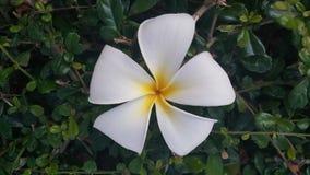 Flor del flor Fotografía de archivo libre de regalías