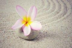 Flor del Frangipani con el fondo de la arena Imagenes de archivo