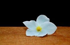 Flor del Frangipani en la madera marrón Fotografía de archivo libre de regalías