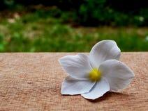 Flor del Frangipani en la madera marrón Fotos de archivo