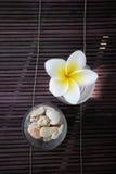 Flor del frangipani y decoración tropicales de la piedra. Fotografía de archivo
