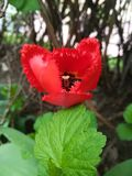Flor del fuego como un coraz?n ardiente fotografía de archivo