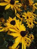 flor del gatsania fotos de archivo
