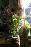 Flor del geranio en luz del sol natural imágenes de archivo libres de regalías