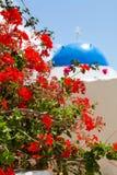 Flor del geranio en Santorini foto de archivo