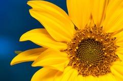 flor del gerbera del primer Fotografía de archivo
