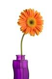 Flor del Gerbera en un florero Fotos de archivo