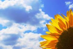 Flor del girasol fotografía de archivo