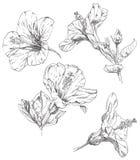 Flor del gráfico de la mano Fotos de archivo libres de regalías