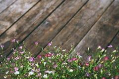 Flor del Gypsophila en el fondo de madera de la textura del vintage Fotos de archivo
