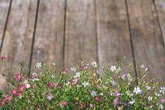 Flor del Gypsophila en el fondo de madera de la textura del vintage Foto de archivo