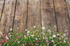 Flor del Gypsophila en el fondo de madera de la textura del vintage Imágenes de archivo libres de regalías