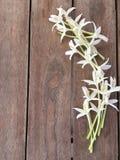 Flor del hortensis de Millingtonia en la tabla de madera foto de archivo