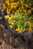 Flor del Hypericum El perforatum herbario de Medicine Foto de archivo libre de regalías