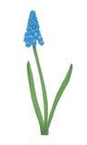 Flor del jacinto del vector. stock de ilustración