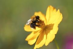 Flor del jardín Imagen de archivo libre de regalías