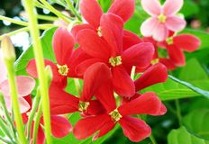 Flor del jardín Imagenes de archivo