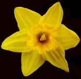 Flor del jardín Fotos de archivo