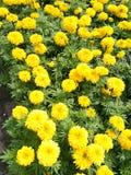 Flor del jardín Foto de archivo