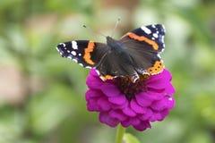 Flor del jardín con una mariposa Fotos de archivo