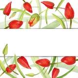 Flor del jardín e hierba verde joven Fotos de archivo libres de regalías