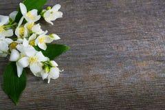 Flor del jazmín en la tabla de madera Tarjeta de felicitación Imagen de archivo