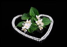 Flor del jazmín y corazón frescos de la perla Fotos de archivo libres de regalías