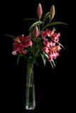 Flor del Lilium Imagen de archivo
