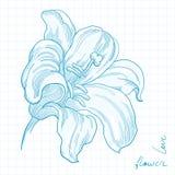 Flor del lirio Imagen de archivo libre de regalías