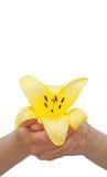 Flor del lirio sostenida en manos Imagen de archivo libre de regalías