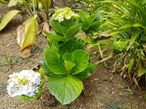 flor del manojo Fotos de archivo