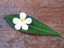 Flor del masaje del balneario en las hojas Imagen de archivo libre de regalías