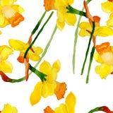 Flor del narciso del verano de la acuarela Imagen de archivo
