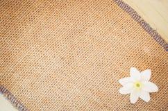 flor del nemorosa de la anémona en un fondo natural de la arpillera Foto de archivo libre de regalías