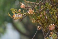 Flor del obús Foto de archivo libre de regalías