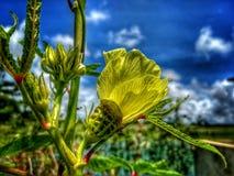 Flor del oro con el cielo azul fotografía de archivo libre de regalías