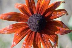 Flor del otoño Fotografía de archivo