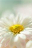 Flor 3 del otoño Fotos de archivo libres de regalías
