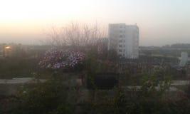 Flor del otoño de la puesta del sol Imagen de archivo libre de regalías