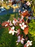 Flor del otoño todavía que crece fuerte imagenes de archivo