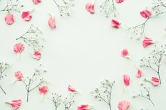 Flor del pétalo en el fondo blanco con el espacio de la copia foto de archivo