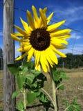 Flor del país Fotos de archivo libres de regalías