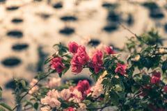Flor del pantano Imagen de archivo libre de regalías