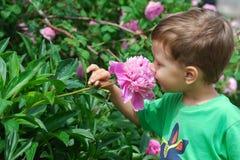 Flor del peony del muchacho que huele Imágenes de archivo libres de regalías