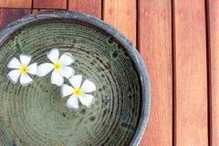 Flor del Plumeria Fotografía de archivo