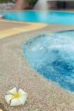 Flor del Plumeria cerca de la piscina Imagen de archivo libre de regalías