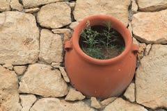 Flor del pote de arcilla en la pared de piedra Visión desde arriba Imagen de archivo