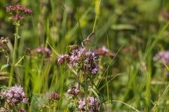 Flor del prado con la mariposa y la abeja Foto de archivo libre de regalías